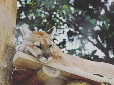 Revere student runs animal sanctuary
